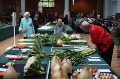 RHS London Harvest Festival Show - in pictures | Life and style | guardian.co.uk