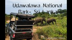 About Udawalawa National Park Udawalawe National Park lies on the boundary of Sabaragamuwa and Uva Provinces, in Sri Lanka. The national park was created to . Most Visited, Family Holiday, Elephants, Sri Lanka, Habitats, Safari, Tourism, National Parks, Memories