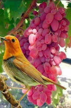 Welcome to Nature Birds 2, Cute Birds, Pretty Birds, Beautiful Birds, Animals Beautiful, Exotic Birds, Colorful Birds, Animals And Pets, Cute Animals