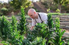 Executive Chef Michael Deg in the gardens of Cavalli Estate. Growing Seeds, Executive Chef, Wine Tasting, Real Food Recipes, Wedding Venues, Art Gallery, Gardens, Tours, Restaurant