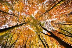 tree canopy wallpaper - Google Search