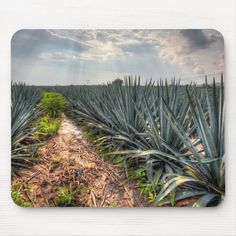 Shop Agave Tequilana Mouse Pad created by LatinContent. Wedding Color Schemes, Wedding Colors, Tequila Agave, Distilled Beverage, Blue Sky Photography, Tequila Drinks, Agave Plant, Corner Designs, Art For Kids