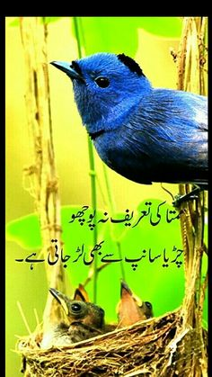 Respect Your Parents, I Love My Parents, Love U Mom, Positive Adjectives, List Of Adjectives, Urdu Quotes, Poetry Quotes, Urdu Poetry, Qoutes