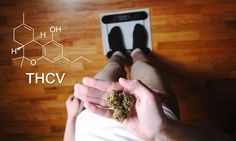 THCV, or tetrahydrocannabivarin, is a unique cannabinoid found in cannabis strains that offers an array of effects from energy stimulation to appetite suppression.