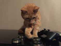 #koty #majki #ps3 niedługo bedzie w bf szalał ;)