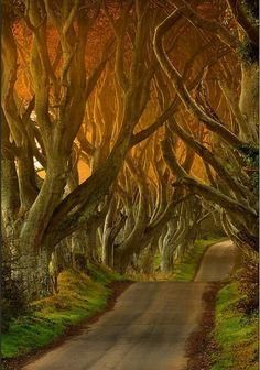 Ballypatrick forest, N Ireland