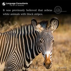 Bottlenose Dolphin, Galapagos Islands, African Safari, Amazing Adventures, Africa Travel, Zebras, Best Funny Pictures, Mammals, Habitats