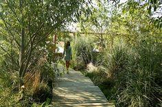 Esta soy yo caminando por un jardín de Juan Grimm. Paisajista Chileno. Foto del Blog View from Federal Twist: Juan Grimm: a garden in Uruguay.