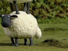 Shaun The Sheep, Videos, Lamb, Sheep, Dragons, Baby Sheep