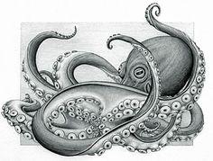 fat octopus