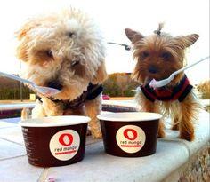 Puppies ♥ #RedMango! #socute  #frozenyogurt #dogs