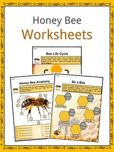 Honey Bee Facts, Worksheets, Anatomy, Lifespan & Diet For Kids - Modern