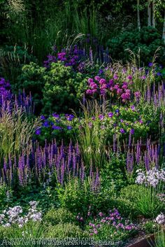 синие травы пейзажного стиля, растения, ландшафтный дизайн,синий, лиловый, сиреневый,