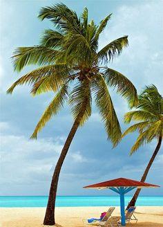 Palm trees and beautiful beaches of Aruba!