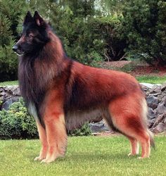 Medium sized dogs are a great choice If a big dog is just too big and the little dogs are just too small for you, then you may want to consider getting one - http://encyclopediaofdogbreeds.com/medium-dog-breeds/