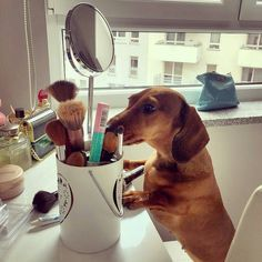 Hello! Good morning how are you? my friend is going to do some makeup so she can look beautiful for all the boys any advice for her?? IG @tosia_dachshund_mini