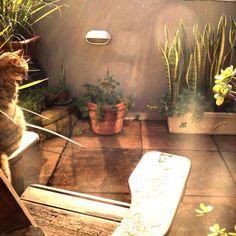 Midget enjoying the early morning sun