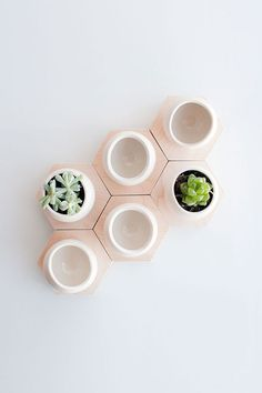 hex spora planters / light + ladder