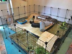 Bunny Cages, Rabbit Cages, Indoor Rabbit Cage, Rabbit Habitat, Rabbit Enclosure, Pet Paradise, Bunny Room, Bunny Hutch, Pet Guinea Pigs