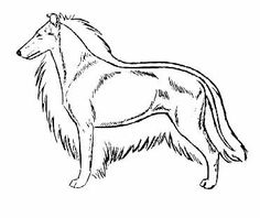 This is a good diagram. I always have to explain that's is just like a short haired rough collie. And they still don't believe me.