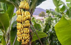 13 Foods That Have More Potassium Than A Banana