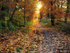 """Sol dorado y hojas de fuego. Craigellachie, Escocia.  """"Los días disminuyen, y el otoño crece, el otoño en todo"""". Robert Browning"""