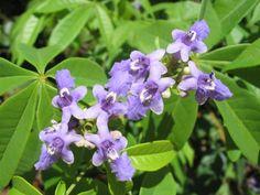 Flores de Macaúbas, BA.
