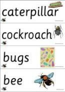 Minibeasts Thematic Unit - 28 Words And Picture Cards - K-3 Teacher Resources