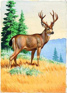 Wildlife Paintings, Wildlife Art, Animal Paintings, Animal Drawings, Art Drawings, Deer Photos, Deer Pictures, Animal Pictures, Deer Drawing