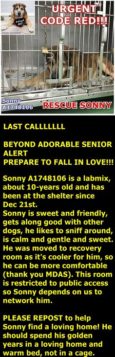 RESCUED --- Sonny is waiting for you today at Miami-Dade Animal Services, 7401 NW 74th Street in Miami, FL.  Please share, tag & repost to help saveSonny.  To foster email asdfoster@miamidade.gov Repost via @lifeisgoodwithdogs. @susiesseniordogs @christina_mignon  https://www.facebook.com/urgentdogsofmiami/photos/pb.191859757515102.-2207520000.1452097339./1104854279548974/?type=3&theater