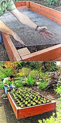 19 Gardening tips that will make your garden productive gardening ideas for beginners, vegetable gardening ideas backyard ideas images small garden ideas on a budget small backyard garden ideas large garden ideas small garden landscaping ideas Garden Ideas Large, Small Garden Design, Patio Design, Vegetable Garden Tips, Veg Garden, Terrace Garden, Garden Park, Small Backyard Gardens, Small Gardens