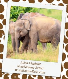 Notebooking Safari - Thailand and the Asian Elephant. Now, I know you've probably seen our next animal before, maybe in a zoo or someplace similar. But, there is so much more to these giant creatures—and their very special trunks—than what you can see at a zoo. That's right, I'm going to introduce you to an Asian elephant.