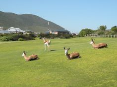 Atlantic Beach Golf Estate Springbok on the Fairway