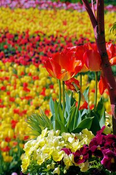 """The Biltmore House """"Festival of Flowers"""" ... annual event from Mid-March through Mid-May, Asheville, NC."""
