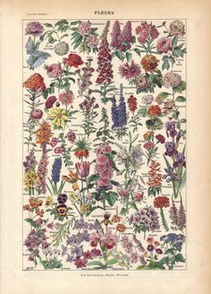Vintage flowers....would be cool to somehow incorporate these into a sleeve design