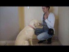 Tuto - 10 tours de dressage pour votre chiot ou chien(ne) - YouTube