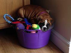 I love my toys Thanx!!!!