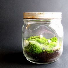 A Made by Mavis terrarium in a jar (find her on etsy)