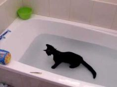 This cat just loves water! Click to watch the cute kitten playing in the bath.