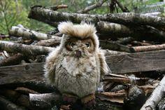 Sarvipöllö - Kananlento/Osuuskunta Orrella Owl, Bird, Animals, Animales, Animaux, Owls, Birds, Animal, Animais