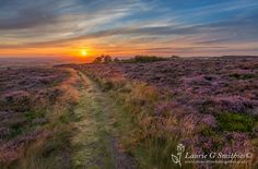 Roseberry Topping – Path Through The Heather Sunset