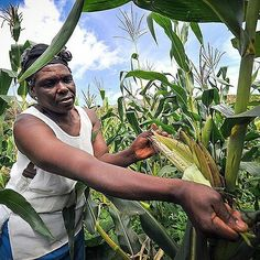 "Small Farmers in Africa Will Experience the Worst of Climate Change ""As a recent report by Agriculture for Impact found hunger and malnutrition could increase by as much as 20 percent as a result of climate change by 2050."" 