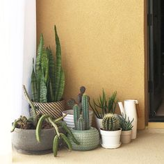 Instagram Balcony Plants, House Plants, Plant Projects, Projects To Try, Indoor Gardening, Indoor Plants, Rooftop Design, Small Terrace, Cactus Cactus