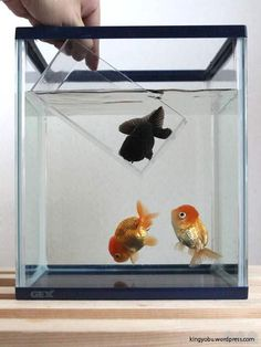 how to add newbies to your tank.