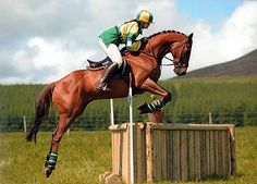 College Dean won at Hamilton in 1998, and he now competes at many one day events. He is very bold on the cross-country with many wins to his credit and has been a real pleasure for his owners.