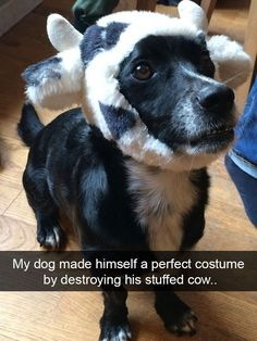 Funny Snapchats Dog Photo – 190 Pics #funnydogs