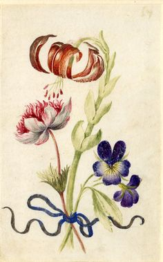 Drawing from an album, orange Turk's Cap, crimson and white Anenome and purple Hearts-ease, tied with blue ribbon Watercolour over metalpoint, shaded with grey wash and heightened with white, on vellum by Alexander Marshal.  © The Trustees of the British Museum