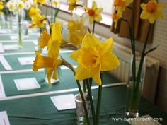 Daffodil Shows and Competitions 2020 - Pumpkin Beth Cut Flowers, Yellow Flowers, Spring Flowers, Daffodil Day, Jacobs Well, 5 April, Alpine Garden, Beneficial Insects, Buy Plants