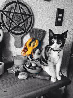 Gato de altar Wicca