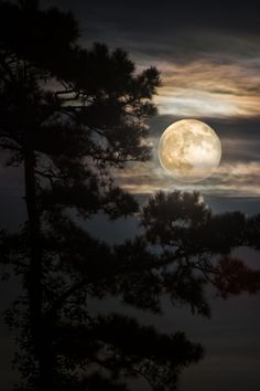 I see a bad moon rising. (Full moon on the horizon Louisiana USA) Nature Landscape, Image Nature, Moon Dance, Shoot The Moon, Moon Pictures, Full Moon Photos, Moon Magic, Moon Rise, Beautiful Moon